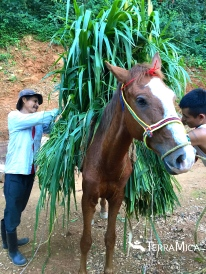 Lao and son packing brown horse