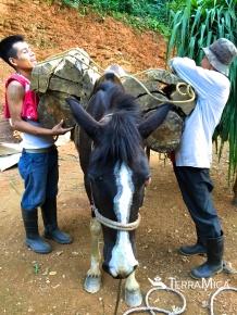 packing the farm horse, TM